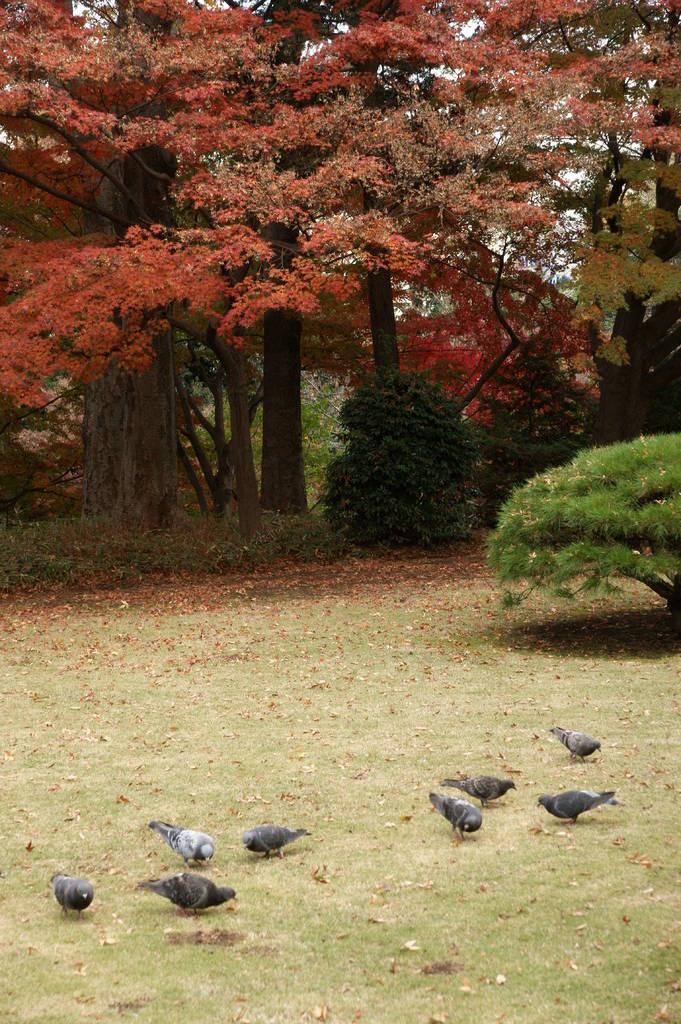 ある秋の日