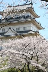 春の小田原城