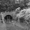 柿田川湧水池