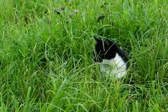 草むらの中に・・・