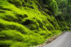 苔むす峠道