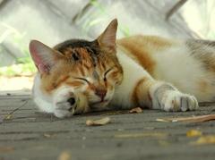 手枕でお昼寝
