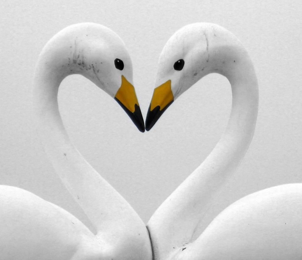 LOVE 2010、2013