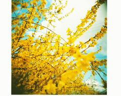 可愛い黄色。