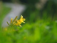 密かに咲く