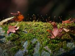苔と落ち葉