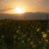 飯山・春の日の出
