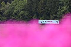 ピンク絨毯