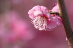 春のぽわん♪
