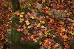 落ち葉のモザイク
