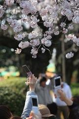 桜の撮影風景