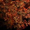 栗林公園 ライトアップ