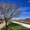 山桜と野田線