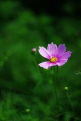 花占いの始まり(その1)