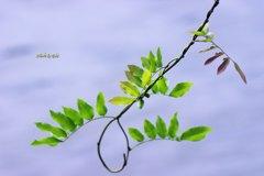 9月1日のある葉の色づき