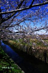 春の初めの用水路