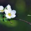 小粒の白い花