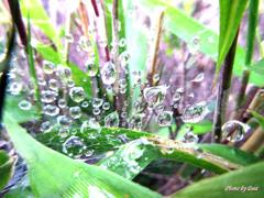 糸と水の共演