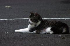 くつろぐ猫さん