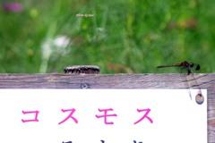 コスモスと蜻蛉