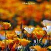 暖色にて春