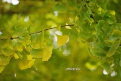 ご神木の葉の一枚