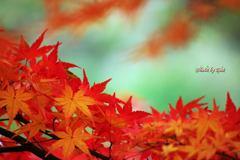 四季彩(秋)1