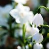 白い花楽器