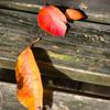 初秋から晩秋へ