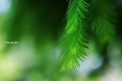 しなだれる緑