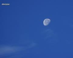 7月14日朝の月(その2)
