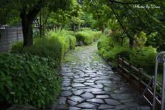 雨上がり公園の石畳 行き