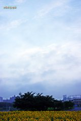 向日葵と空