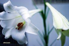 先に咲く花後に咲く花