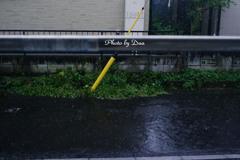 午後からの雨