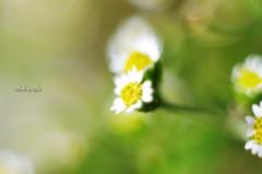 小さく咲く花
