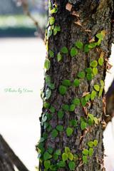 幹にグリーンのハート