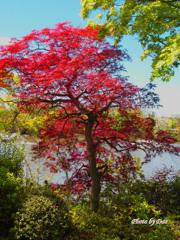 春でも紅い葉
