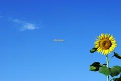 空と雲と向日葵と(その1)