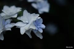 ホワイト&ブルー