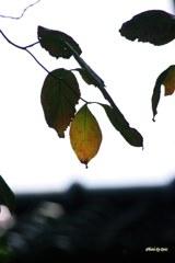 落ち葉の手前(その1)