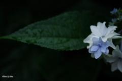 花と葉(その1)