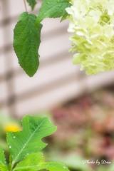 雫と葉と花と