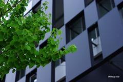 スクエアと緑