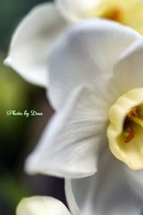 厚い花びら