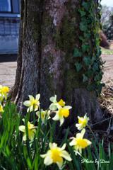 樹と蔦と花と