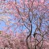 桜~米泉湖~