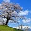 ふたたびの一目千本桜②
