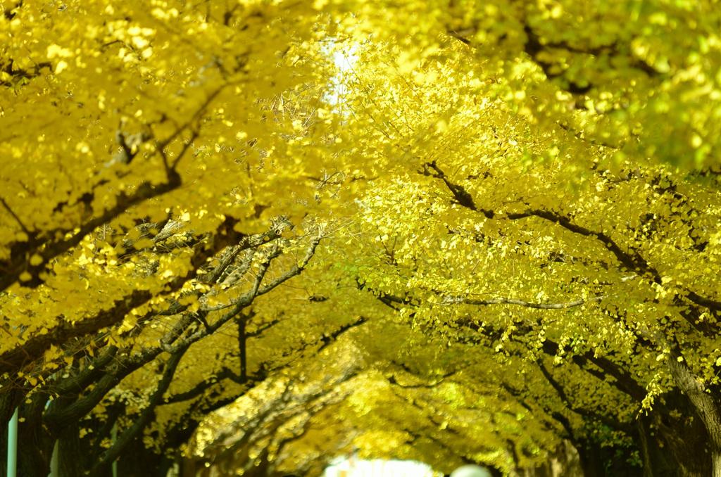 黄金色の天井の下で
