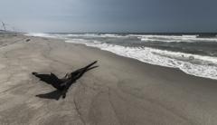 この頃の砂浜 2